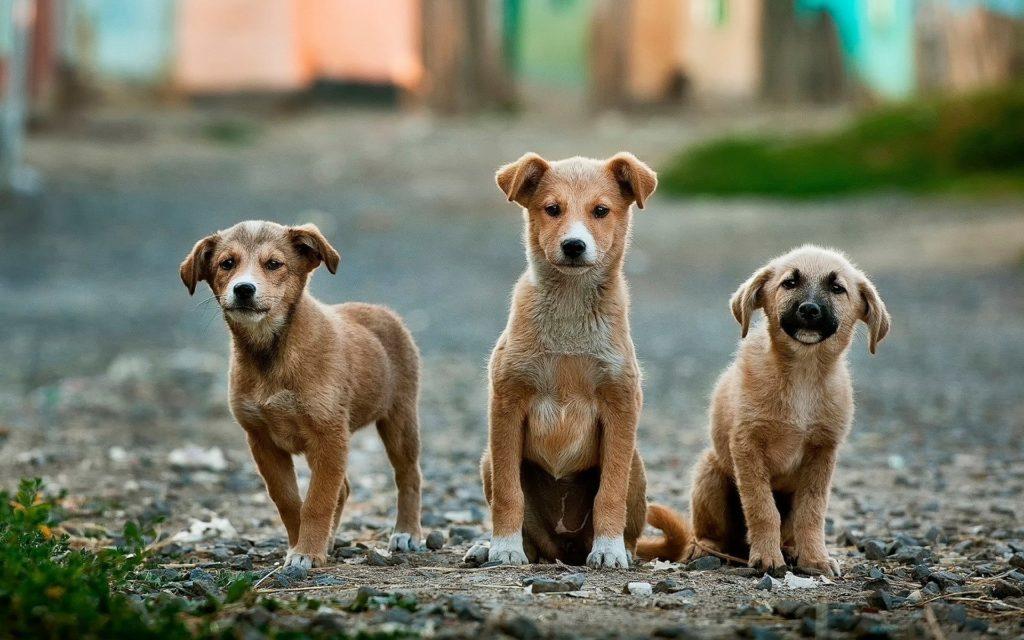 Tierhalterhaftpflicht – Wenn Hunde und Pferde Schaden anrichten