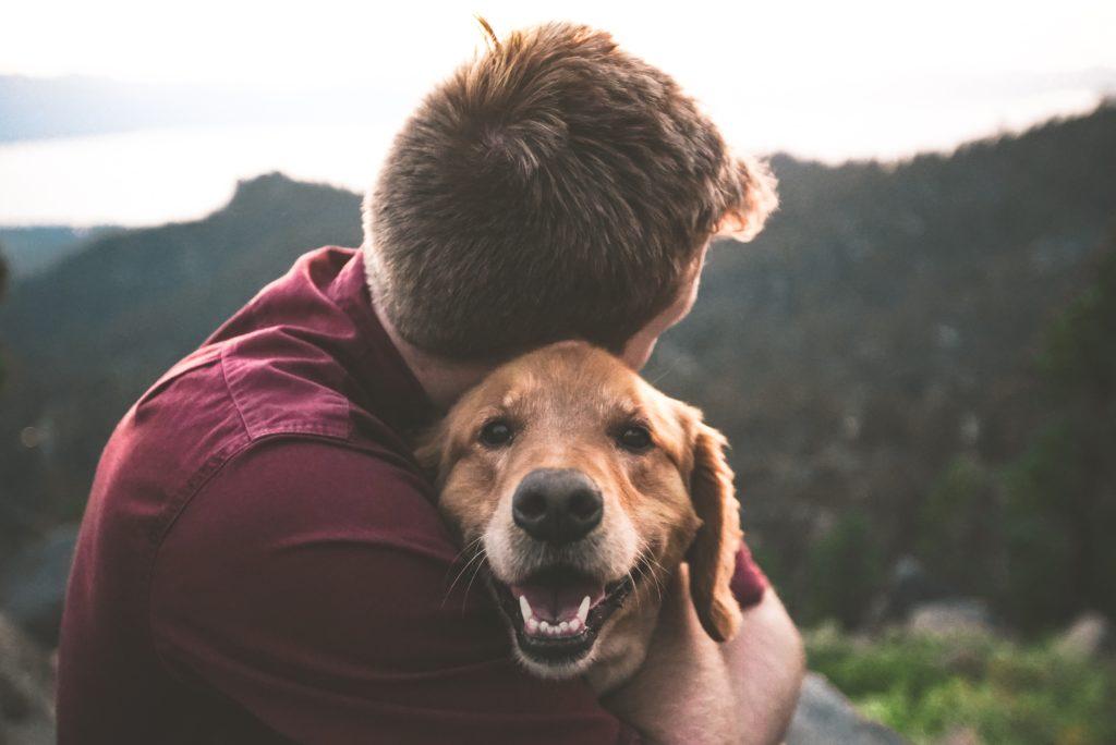 Tierhalterhaftpflicht - auch im Ausland gültig