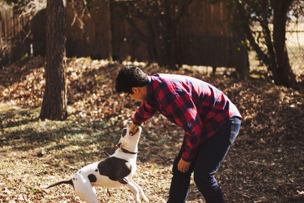 Tierhalterhaftpflichtversicherung - Schutz bei Sach- oder Personenschäden